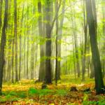 L'investissement forestier : un placement très attrayant sur le plan fiscal !